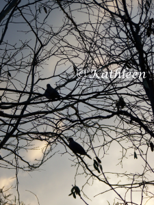 Another photo of the birds in the tree.